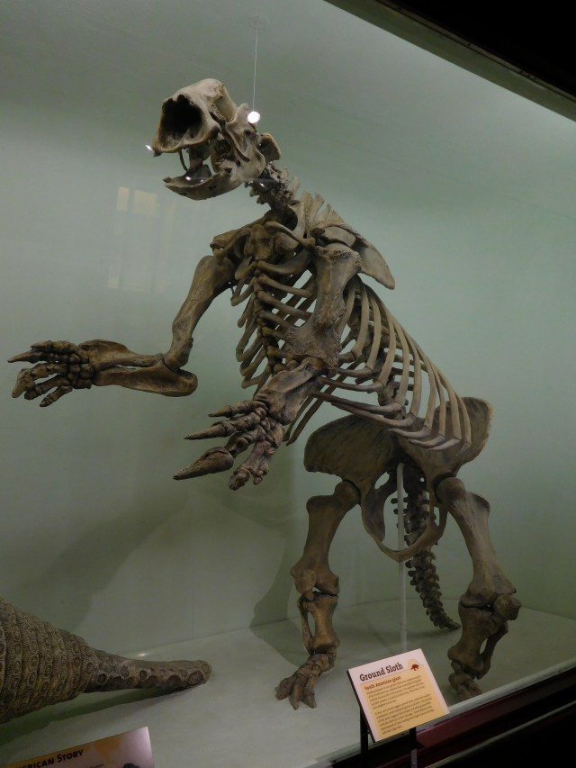 Harvard_Museum_of_Natural_History_10