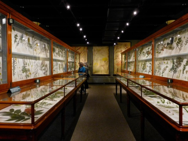 Harvard_Museum_of_Natural_History_5
