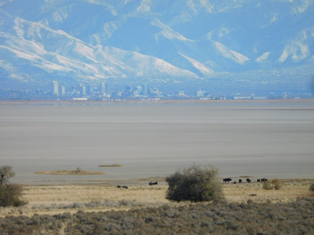 antelope_island_state_park_16