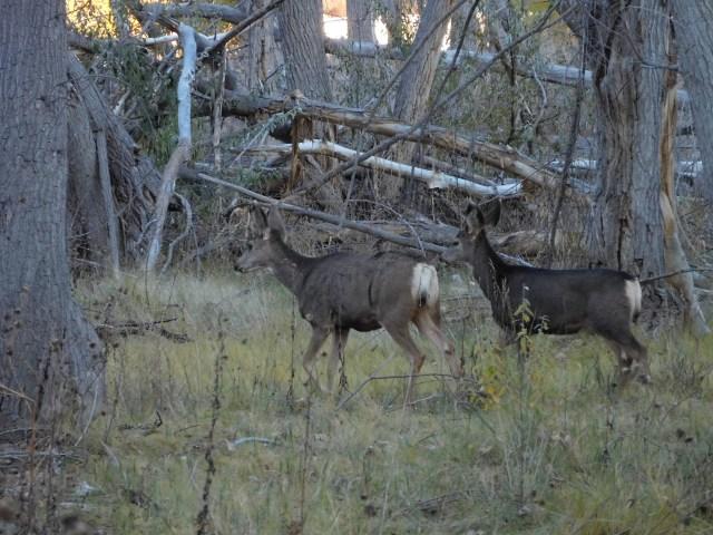matheson_wetlands_preserve_moab_6