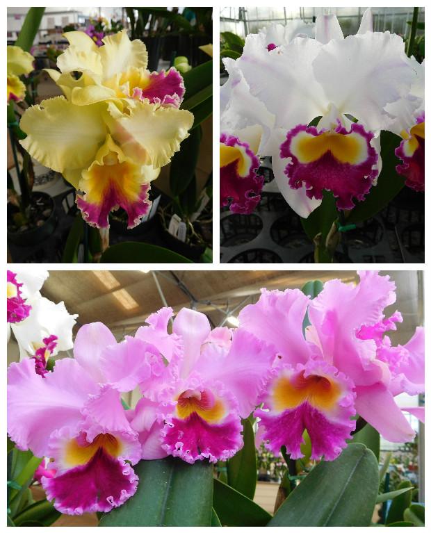 Akatsuka_Orchid_Gardens_5