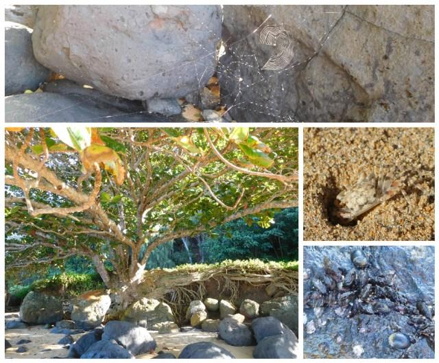 anini_beach_kauai