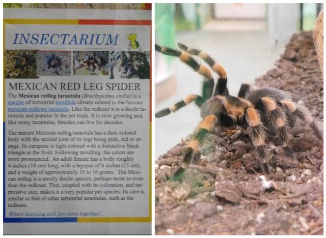 insectarium_philadelphia_8788