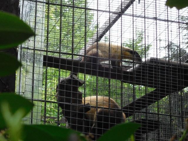 Jardin_des_Plantes_zoo