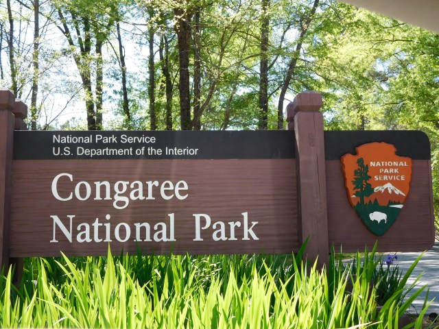 congaree_national_park
