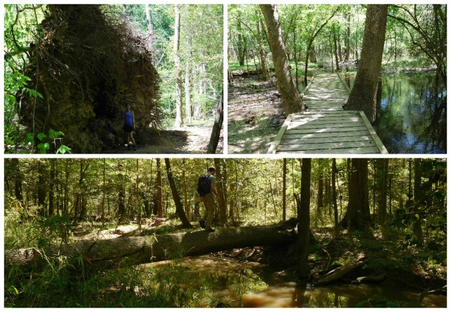 congaree_national_park_12