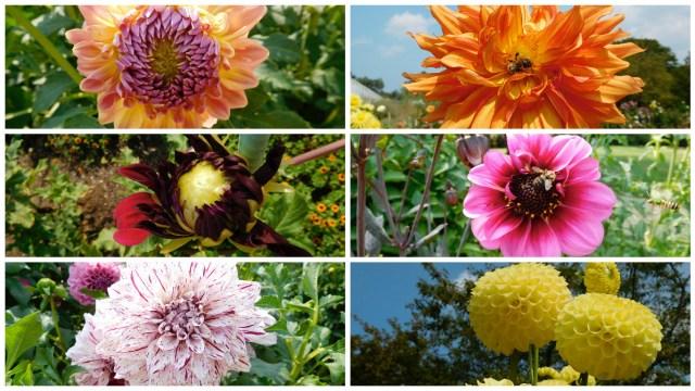 planting_fields_arboretum_1