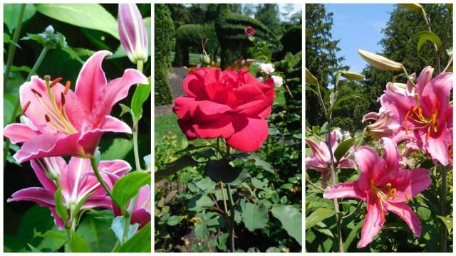 topiary_garden_rhode_island