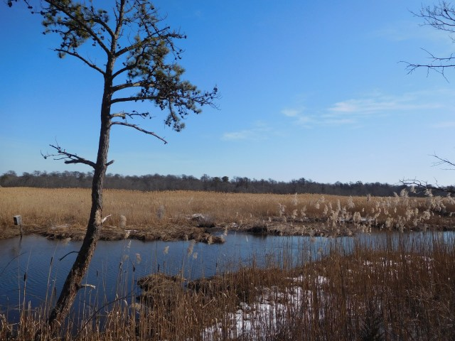 wertheim_national_wildlife_refuge_long_island_7