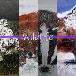 Wildlife Gallery Image