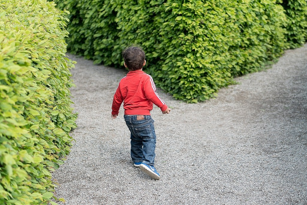 A toddler boy is walking on a path that splits in front of him