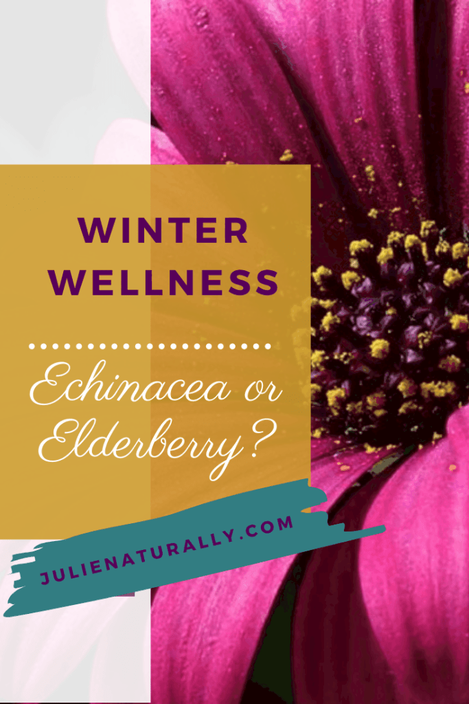echinacea flower for winter wellness