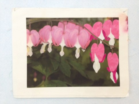 Bleeding Hearts_june