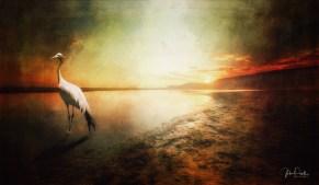 JuliePowell_Blue Crane at Sunset