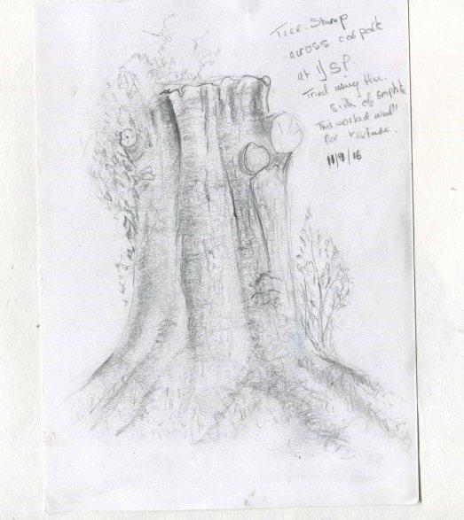 tree-stump-sketch028