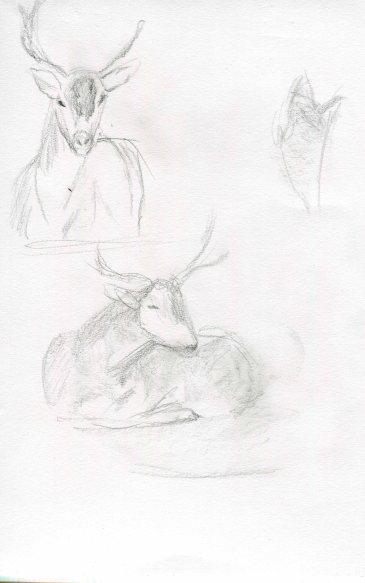 deer-sketch-blog-5