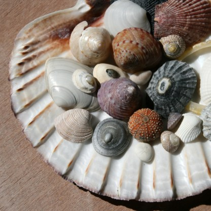 Latest finds from North Uist's beaches