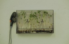 cress-and-sound-1