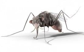 Éléphantesque insecte !