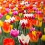 Tanzende Blumen Julifoto Blog