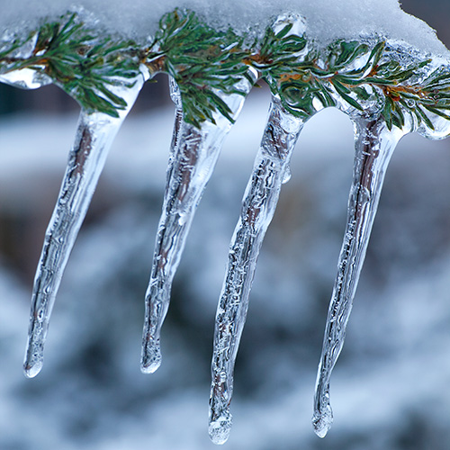 Ice and Pine