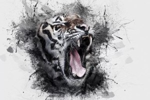 tiger aggression