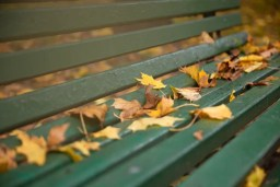 Leaves on an empty park bench