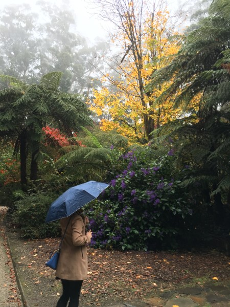 dandenong ranges autumn 25