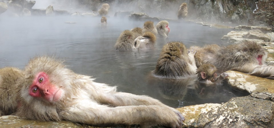 Travel: Japan Trip 2012 (Day 11 – Yamanouchi Jigokudani Monkey Park – Snow Monkeys!)