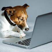 hiring dog walkers