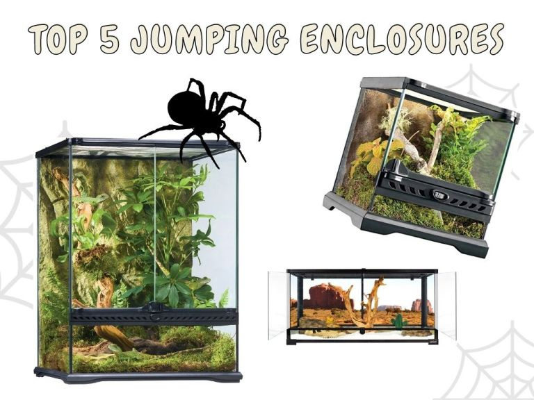 best jumping spider enclosures
