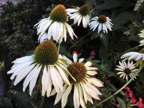 Christine's Garden 2
