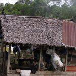 ティドン族伝統家屋のニッパヤシの屋根