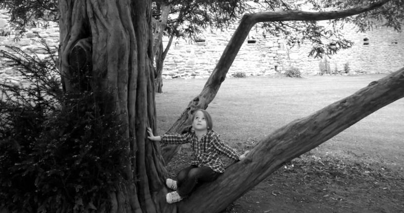 Hier sitzt ein kleines Mädchen in einem Baum und betrachtet die Baumkrone von unten.