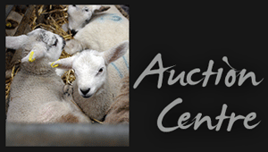 Sedgemoor Auction Centre