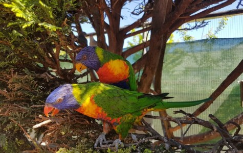 The extinction crisis threatening Australian animals