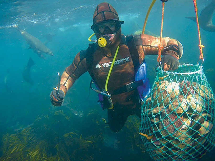 Abalone diver Craig Fox: Image/ Western Abalone Divers Association