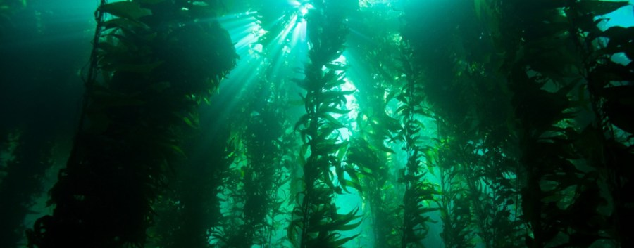 Kelp+forest