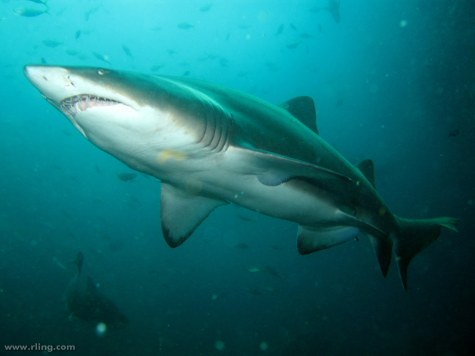 There has been a decline of sharks since the implementation of the Shark Control Program, demonstrating a depletion of shark populations over the past half a century.