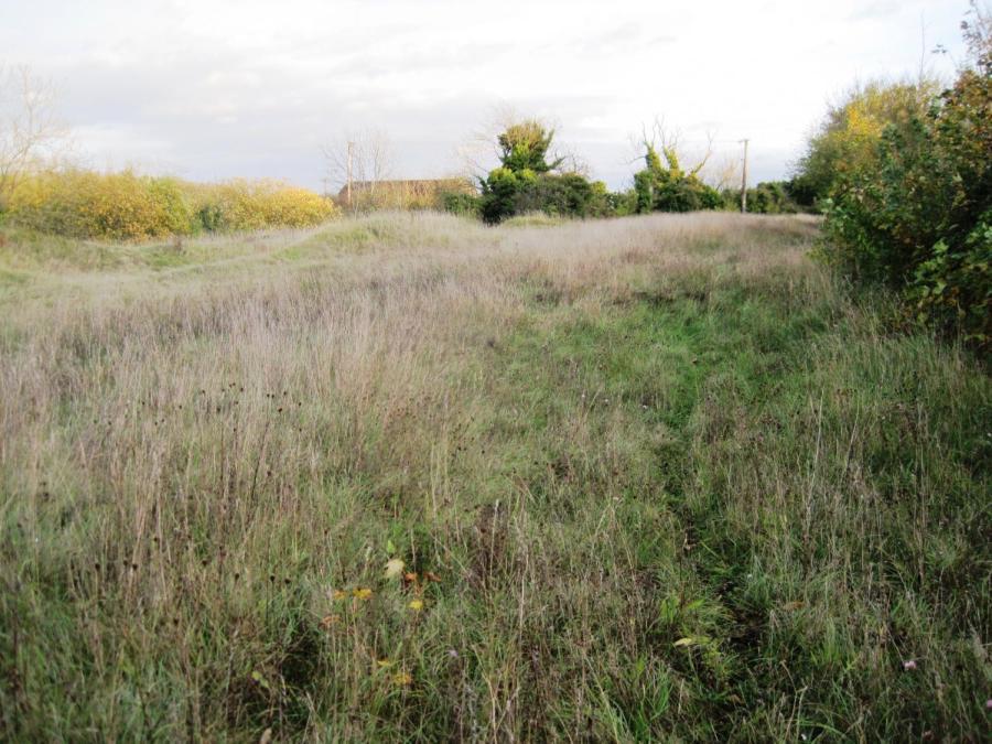 an empty field