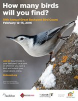 Join the Great Backyard Bird Count at 2pm