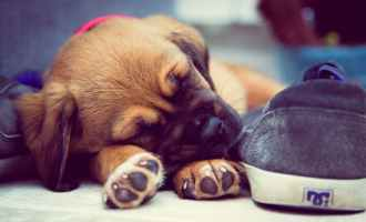 Top 5 must know dog sites.