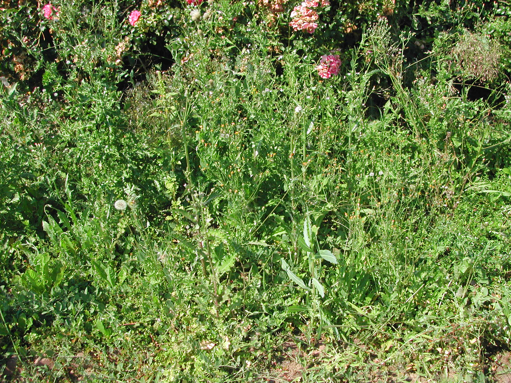 Before: Yes, there are cranberries under those weeds.