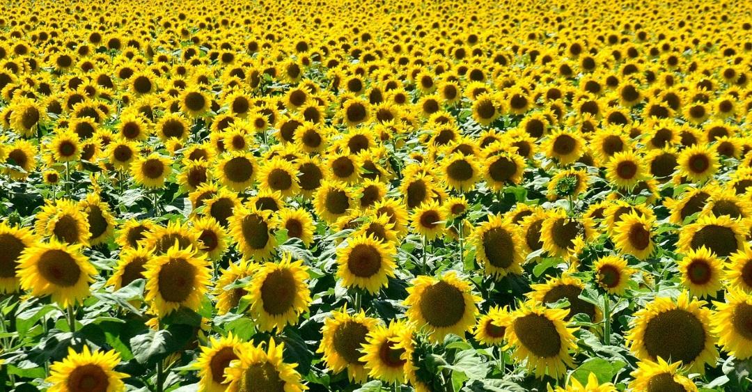 Junggesellenabschied Sommer 15 Programm Tipps fr Sonne pur