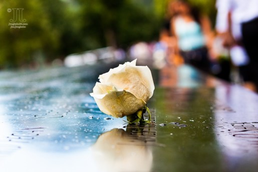 Diese Rose steckte in einem der nahezu 3.000 Namen, derer im 9-11-Memorial gedacht wird.