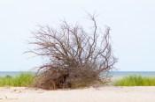 Am Strand von Brewster bestimmt die Natur das Bild.