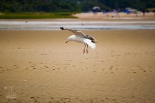 Landung am Strand