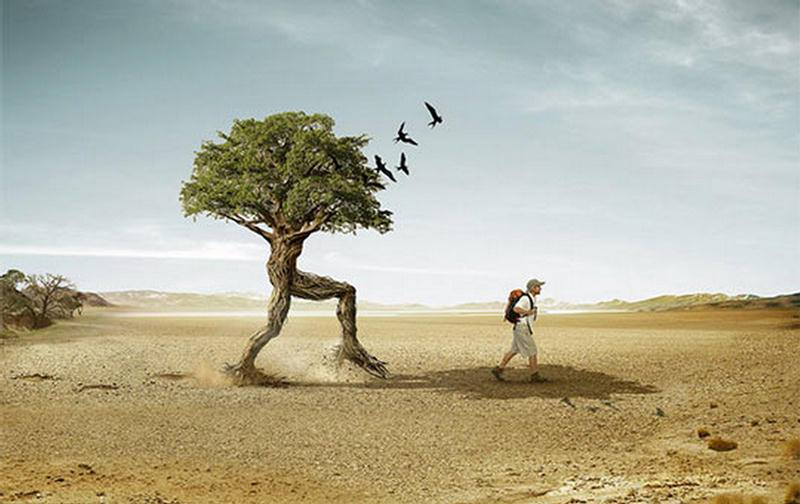 Image result for pictures of ancestral trees