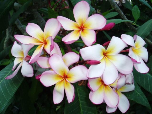 푸르메 Flowers