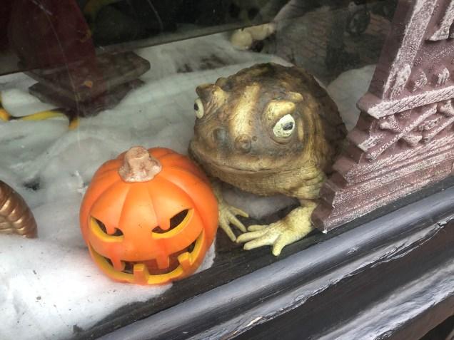 2018 Frog Encounters Fan 13 10